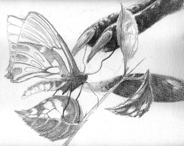 A drawing of a butterfly in the grip of an alien claw.